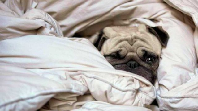 Duvet Days and Hangover Days